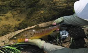 White River Brown  Aug 19 2013